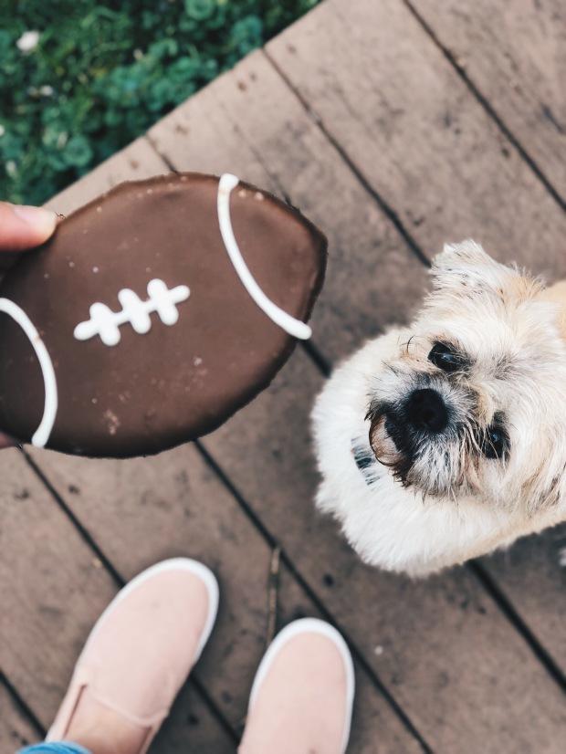 sunday football cookie treat shitzu dog